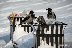 Клипарт. Собаки. ДТП и др. Екатеринбург, мусор, помойка, вороны, загрязнение среды