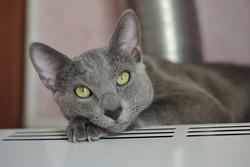 Открытая лицензия от 16.09.2016. , кот, тепло, отопление, домашнее животное, отопительный сезон, уют, котик на батарее