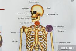 Клипарт Челябинск, череп и кости, скелет