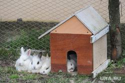 Животные. Челябинск, кролик