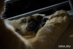 Львица Лола вылетает в Крым. Екатеринбург, лев, дикие животные, лыпы