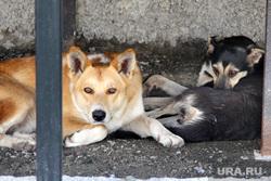 Билборды к выборам Курган, собаки, бездомные животные