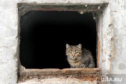 Фото - разное Курган, котенок, окно в подвал
