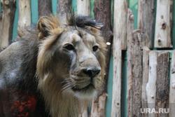 Чехия, Прага, разное, лев, зоопарк