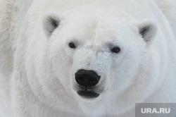 Челябинский зоопарк. Разная скотина.Челябинск., арктика, белый медведь