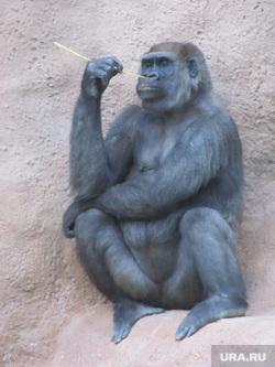 Клипарт, горилла