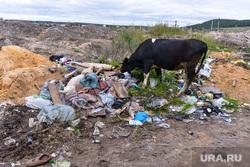 Верхний Уфалей. Нижний Уфалей. Казаков Павел. Челябинск., мусор, корова, скотина, свалка
