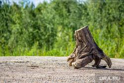 Мост через Вах. Излучинск, дерево, пень, пенек, дурак, вырубка, дрова