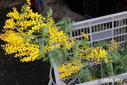 Цветы к 8 марта Курган, мимоза