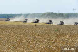 Дубровский и пшеница Челябинск, поле, комбайн, пшеница, урожай, уборочная