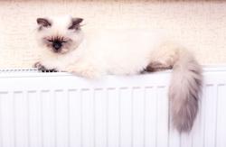 Коты на батарее, кот, тепло, отопление, домашнее животное, отопительный сезон, уют, котики на батарее
