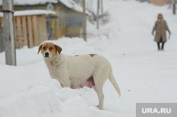 Клипарт, разное. Свердловская область, деревня, бродячая собака, сука
