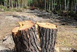 Вырубка леса КГСХА Курганская область, вырубка леса, просека, пни