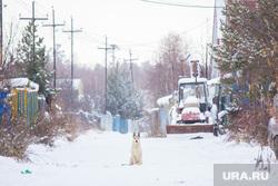 Собаки и дачи. Нижневартовск., частный сектор, сады, огороды, дачи, собака