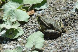 Лягушка Челябинск, лягушка
