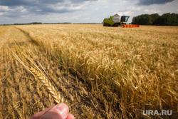 Начало уборочной кампании. Сельхозугодья Белоярского района. Екатеринбург, поле, уборка урожая, ячмень, колосья, сельское хозяйство