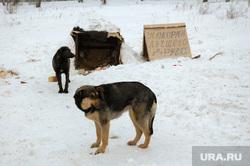 Зима. Бездомные собаки. Дворняги. Челябинск, собаки, зима, дворняги