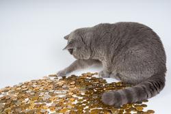 Открытая лицензия 10.06.2015. Деньги., кот, монета, деньги