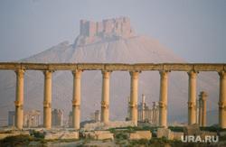 Клипарт depositphotos.com, пальмира