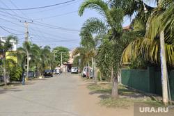Шри-Ланка, пальма