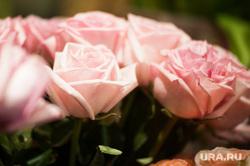 Цветочные магазины. Екатеринбург, розы, растение, букет, 8марта, цветы