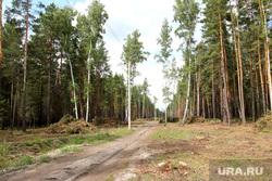 Вырубка леса КГСХА Курганская область, линия электропередач, вырубка леса, санитарная зона