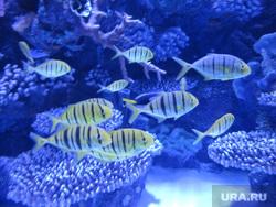 Турция, аквариум, рыбы