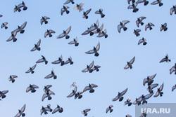Клипарт. Ханты-Мансийск., голуби, птицы, небо