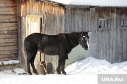 Клипарт. ЯНАО , лошадь, конь, домашнее животное