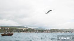 Коктебель, клипарт, море, курорт, чайка