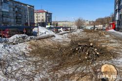 Срубленные деревья улица Володарского д 60. Курган., вырубленные деревья