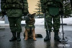 Однодневные сборы парламентариев и прессы в 21 бригаде Росгвардии. Москва, служебная собака, росгвардия, овчарка