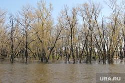 Паводок Затопленные дома Курган, паводок2016, наводнение, деревья в воде