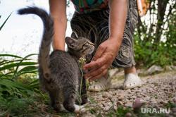 Североуральск, котенок, домашние животные
