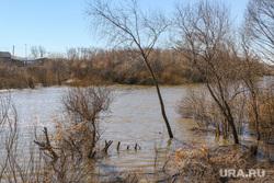 Паводок 2017 Река Тобол в Кургане., паводок2017, река тобол, затопленные деревья
