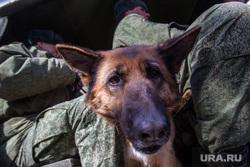 Празднование первого Дня войск Национальной гвардии. Тюмень, кинологи, собаки