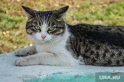 Клипарт, всего понемногу, кошка, котэ, кот, домашнее животное