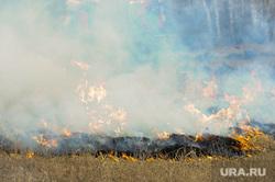 Совместные учения МЧС Челябинской и Курганской областей по тушению лесных пожаров. Челябинск, пламя, огонь, лесной пожар, сельскохозяйственный пал