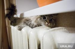 Кошка на батарее. Екатеринбург, холод, зима, тепло, домашние питомцы, кошка на батарее, осень