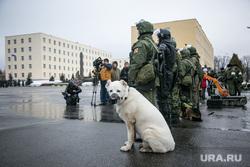 Однодневные сборы парламентариев и прессы в 21 бригаде Росгвардии. Москва, служебная собака, алабай, росгвардия, овчарка