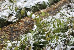 Первый снег  Курган, первый снег