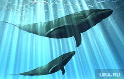 Клипарт depositphotos.com, киты, синий кит