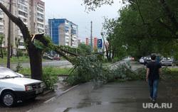 Ураган и ливень в Челябинске, 06.06.2014, сломанное дерево