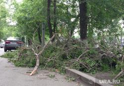Тюмень. Поваленные деревья. Сильный ветер. 17.06, ураган поваленные деревья