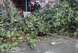 Последствия урагана в Асбесте, поваленное дерево