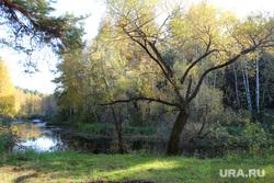 Осенняя природа, разное Курган, лес