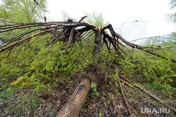 Танковое училище. Челябинск., последствия, ураган, дерево