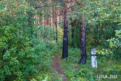 Рабочая поездка по городу. Екатеринбург, сосны, зелень, кусты, лес, тропинка