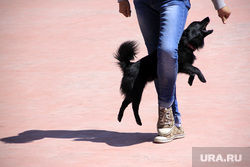 Танцы с собаками. Челябинск. Клуб