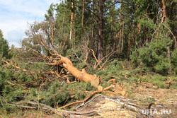 Вырубка леса КГСХА Курганская область, вырубка леса, нелеквидная древесина